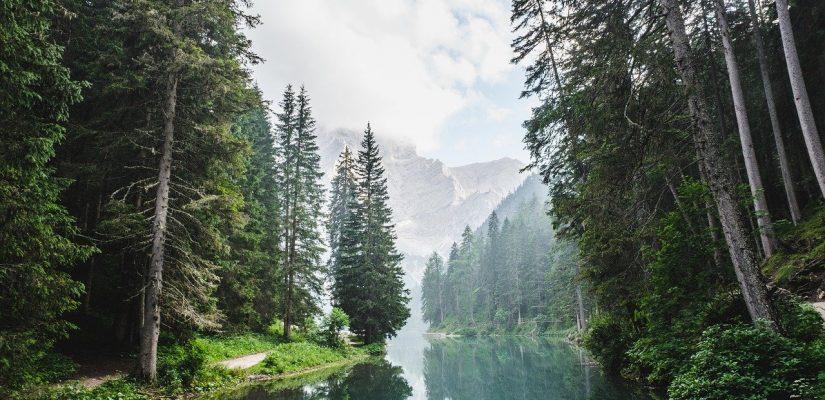 cours d'eau qui passe au milieu d'une forêt