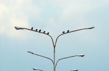 Comment aider les oiseaux des grandes villes ?